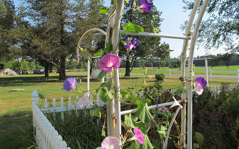 Willow Pond Garden